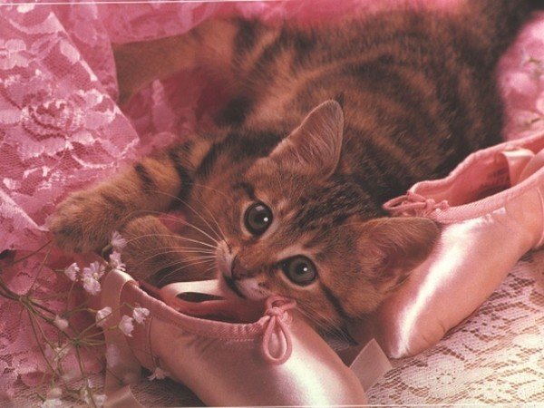 Chaton et chaussons