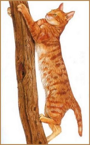 Le chat est un excellent grimpeur