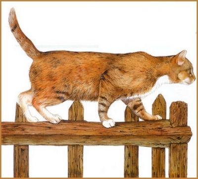 Le chat est un félin très agile
