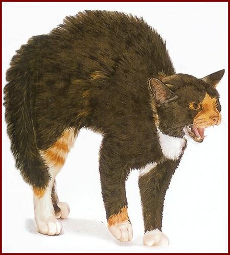 Le chat fait le dos rond pour effrayer
