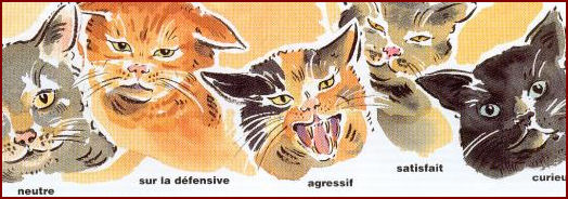 Les différentes expressions des oreilles du chat