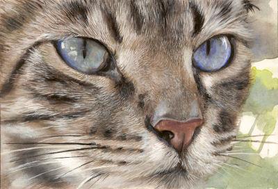 Gros plan en peinture d'un chat