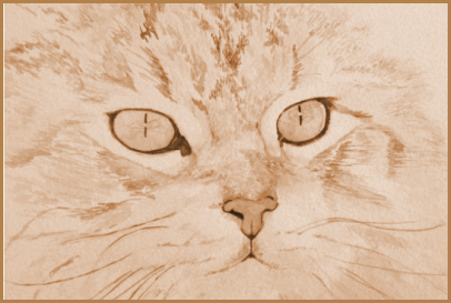 Dessin portrait du chat