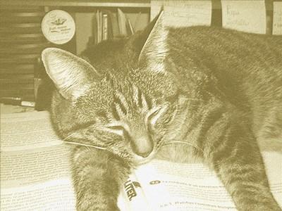 chat-sur-livre.jpg