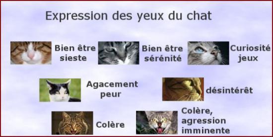 Les différentes expressions des yeux du chat