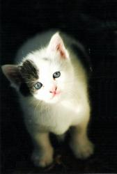 chaton02-1.jpg