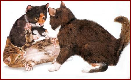 chatons-jouent-ensemble.jpg