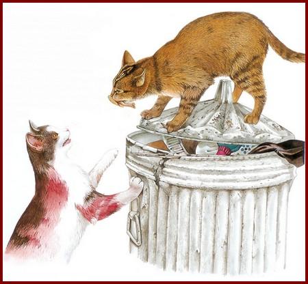 Le chat aime fouiller les poubelles
