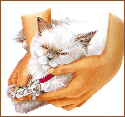 Couper les griffes du chat