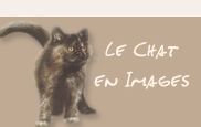 Le chat en images
