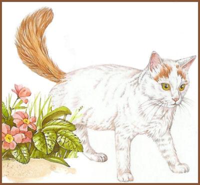 Le chat turc