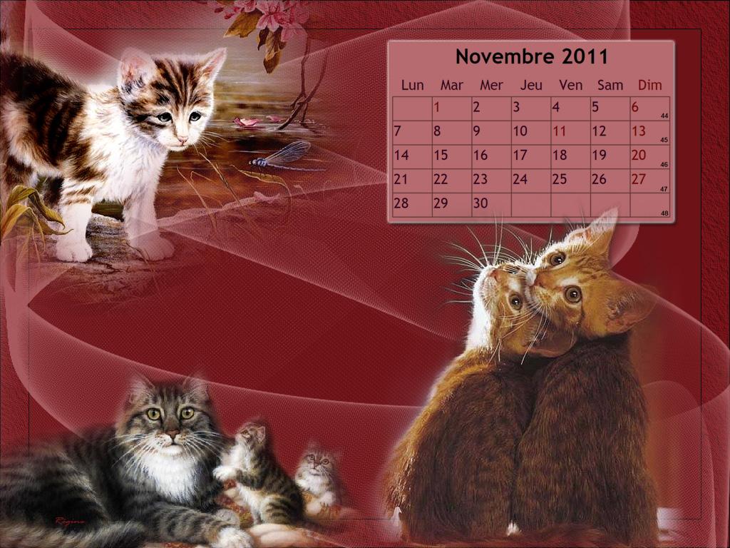 Calendrier Chat fond d'écran - Novembre 2011