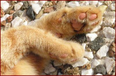 Les pattes du chat