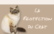 Protection du chat