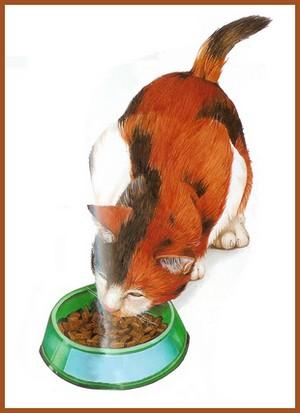 Le repas du chat
