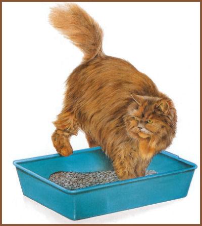 Un petit coin pour les besoins du chat